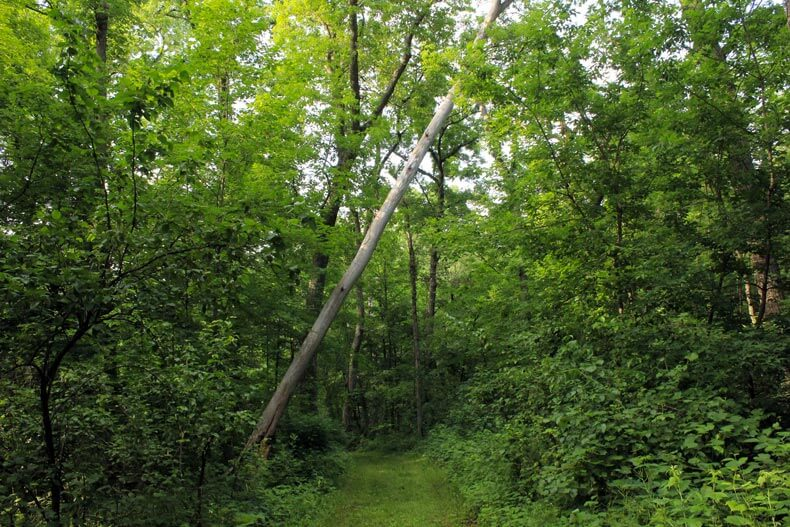 A Tree Fall In The Woods.