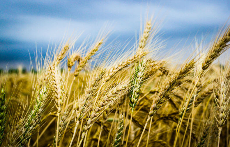 The Wheat Field Principle